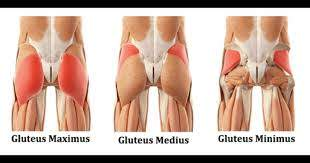 The gluteus maximus is the biggest... - Freedom Physiotherapy & Wellness  Centre | Facebook